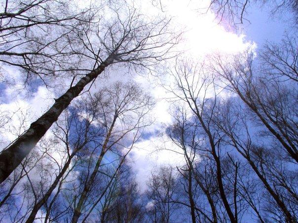 Фото Деревья стремятся в небеса