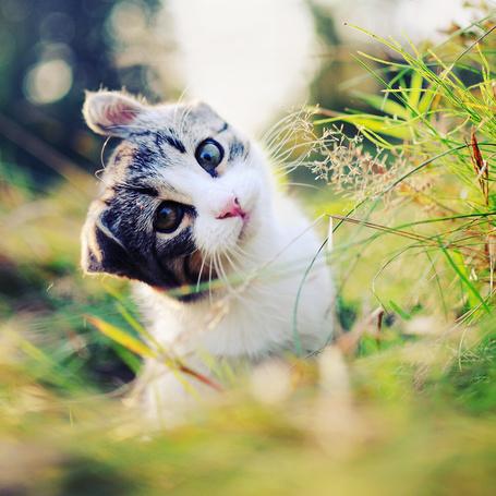 Фото Милый кот сидит в траве (© Радистка Кэт), добавлено: 03.09.2011 04:00