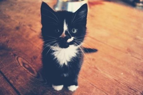 Фото Милый котенок (© Радистка Кэт), добавлено: 03.09.2011 04:17