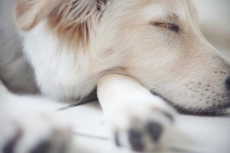 Фото Пёс спит на лапе (© Штушка), добавлено: 04.09.2011 13:02