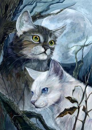 Фото Пепельный и белый коты (© Юки-тян), добавлено: 04.09.2011 16:35