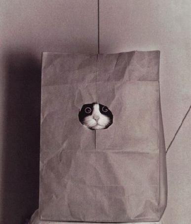 Фото Кот в бумажном пакете