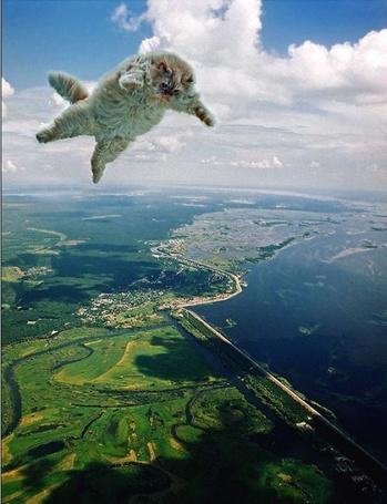 Фото Кот парит в небе (© alcatel), добавлено: 05.09.2011 12:00