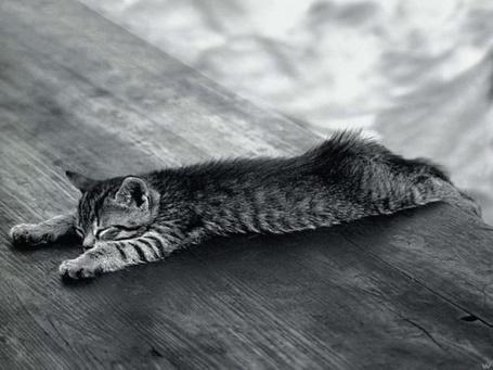 Фото Котёнок лежит распластавшись (© alcatel), добавлено: 05.09.2011 17:22