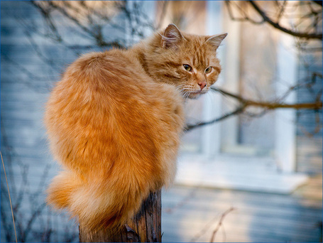 Фото Кот сидит на столбе (© alcatel), добавлено: 05.09.2011 18:57