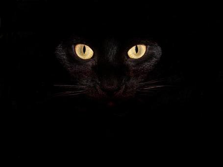 Фото Чёрный кот с горящими глазами (© Volkodavsha), добавлено: 07.09.2011 20:23