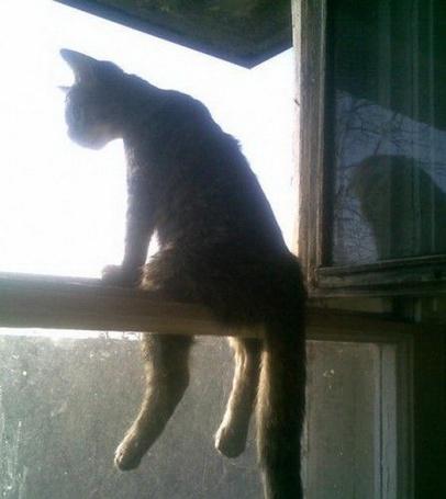 Фото Кот сидя на форточке смотрит сверху вниз на окружающий мир