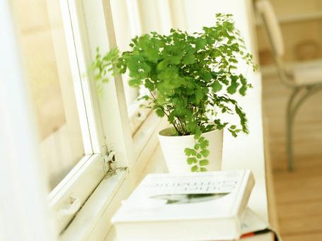 Фото Кустик стоит на окне (© Штушка), добавлено: 08.09.2011 17:36