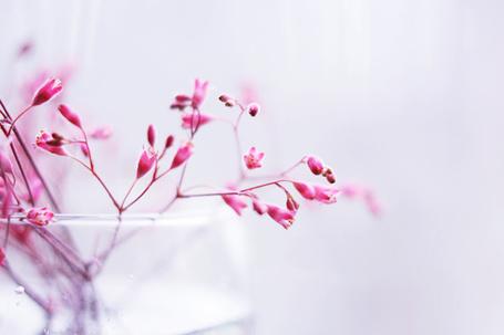 Фото Цветочки в вазе (© TARAKLIA), добавлено: 08.09.2011 18:05