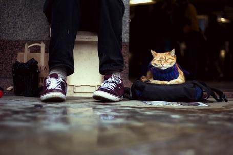 Фото Кошка лежит на сумке в ногах у человека (© alcatel), добавлено: 08.09.2011 18:27