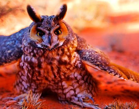 Фото Филин с расправленными крыльями (© alcatel), добавлено: 09.09.2011 21:03