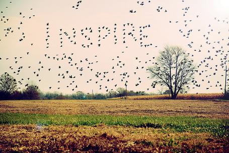 Фото Над осенней поляной пролетает стая птиц ('Inspire' / 'Вдохновлять') (© Радистка Кэт), добавлено: 10.09.2011 15:42