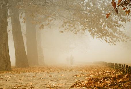 Фото Осенние клёны в тумане (© TARAKLIA), добавлено: 10.09.2011 20:57