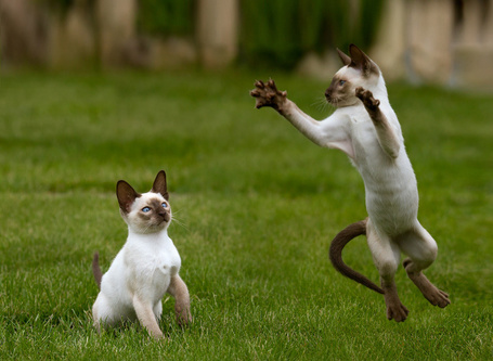 Фото Котята играют на траве (© alcatel), добавлено: 10.09.2011 22:57