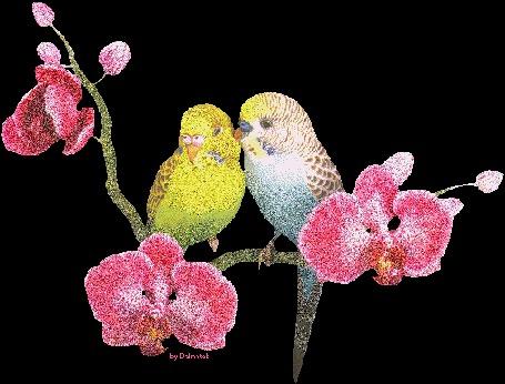 Фото Влюбленные попугайчики (© Anatol), добавлено: 12.09.2011 15:44