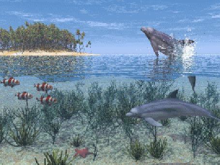 Фото Дельфины резвятся, выпрыгивая из воды (© Anatol), добавлено: 12.09.2011 16:01