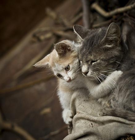 Фото Кошка с котёнком (© alcatel), добавлено: 12.09.2011 17:30