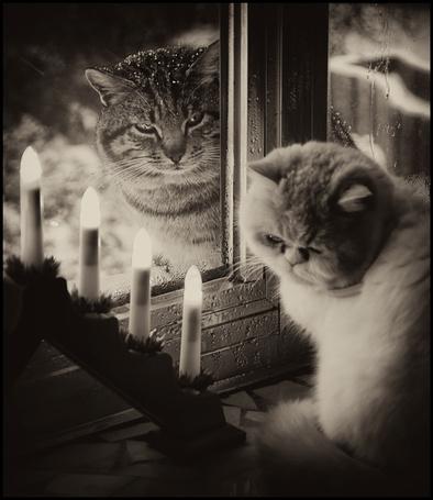Фото Грустные кошки (© alcatel), добавлено: 12.09.2011 18:34