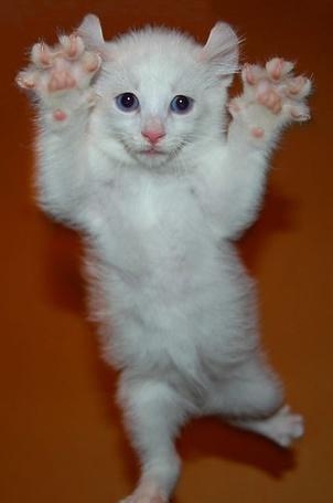 Фото Забавный котёнок (© alcatel), добавлено: 12.09.2011 19:23