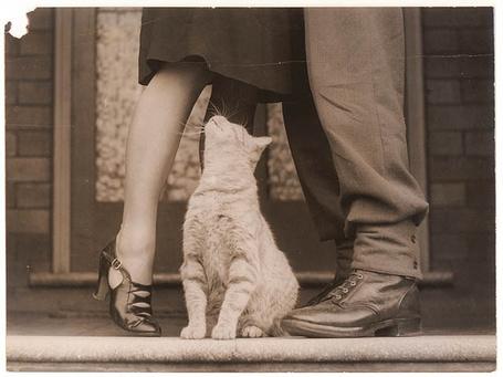 Фото Кошка смотрит девушке под юбку (© alcatel), добавлено: 13.09.2011 15:11
