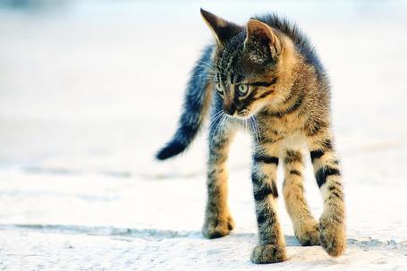 Фото Забавный котёнок (© alcatel), добавлено: 13.09.2011 22:09