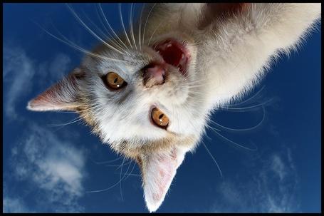 Фото Кот на фоне неба