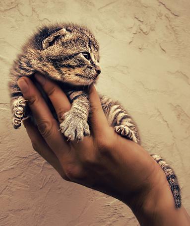 Фото Котёнок на ладони (© alcatel), добавлено: 14.09.2011 01:04