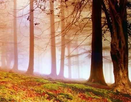 Фото Красивый лес (© Штушка), добавлено: 15.09.2011 01:55