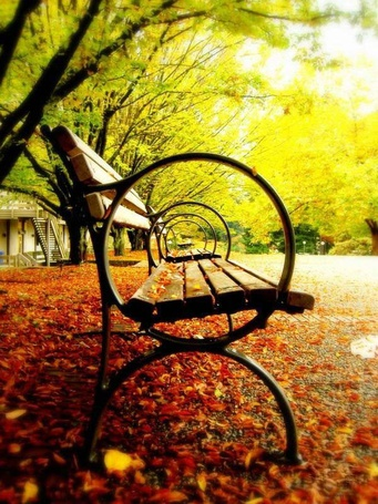 Фото Скамейки в осеннем парке (© alcatel), добавлено: 15.09.2011 13:48