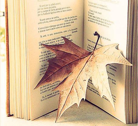Фото Лист клёна и старая книга (© TARAKLIA), добавлено: 15.09.2011 20:06