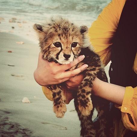 Фото Детеныш леопарда в руках у девушки