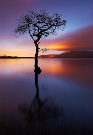 Фото Дерево посреди воды на закате (© alcatel), добавлено: 16.09.2011 00:06