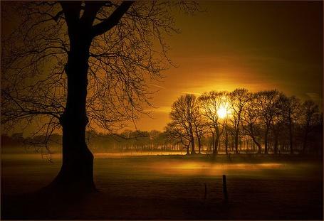 Фото Силуэты деревьев на закате