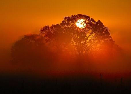 Фото Деревья в тумане (© Флориссия), добавлено: 16.09.2011 14:33
