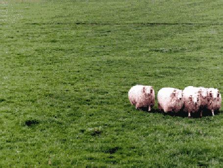 Фото Сосчитайте овечек (© Anatol), добавлено: 16.09.2011 18:26