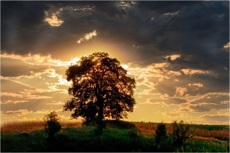 Фото Дерево в поле (© Флориссия), добавлено: 17.09.2011 19:31