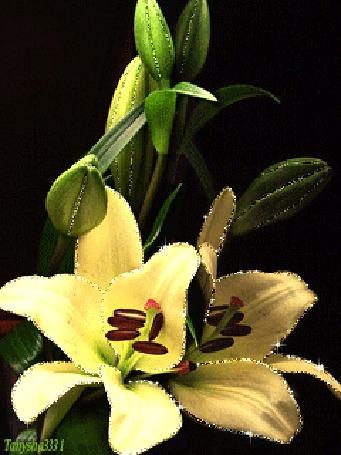 Фото Нежные лилии