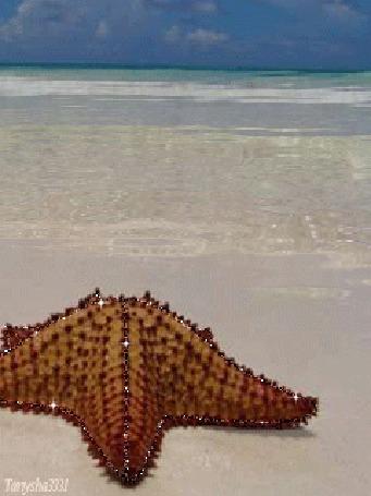 Фото Морская звезда (© tanysha3331), добавлено: 18.09.2011 18:10