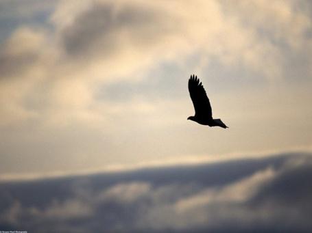 Фото Птица в небе (© Юки-тян), добавлено: 19.09.2011 18:28