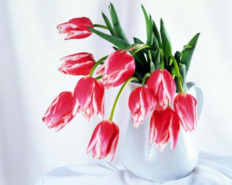 Фото Тюльпаны в белом кувшине на белоснежной скатерти