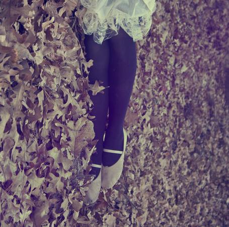 Фото Ножки девушки, лежащей на осенней листве (© D.Phantom), добавлено: 22.09.2011 10:06
