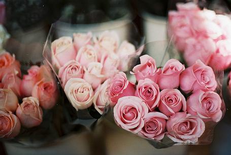 Фото Букеты розовых роз (© Штушка), добавлено: 24.09.2011 13:21