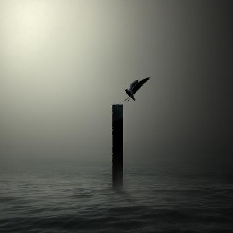 Фото Птица над морем (© Флориссия), добавлено: 24.09.2011 15:22