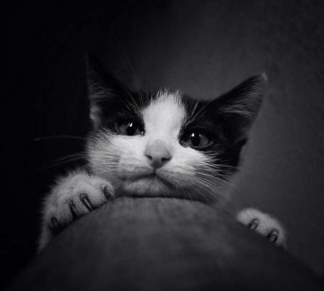 Фото Кот высовывает мордочку (© alcatel), добавлено: 26.09.2011 01:48