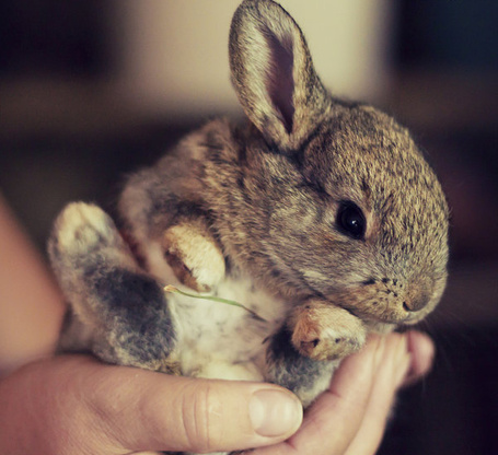 Фото Серый кролик в руке у девушки (© TARAKLIA), добавлено: 26.09.2011 19:00