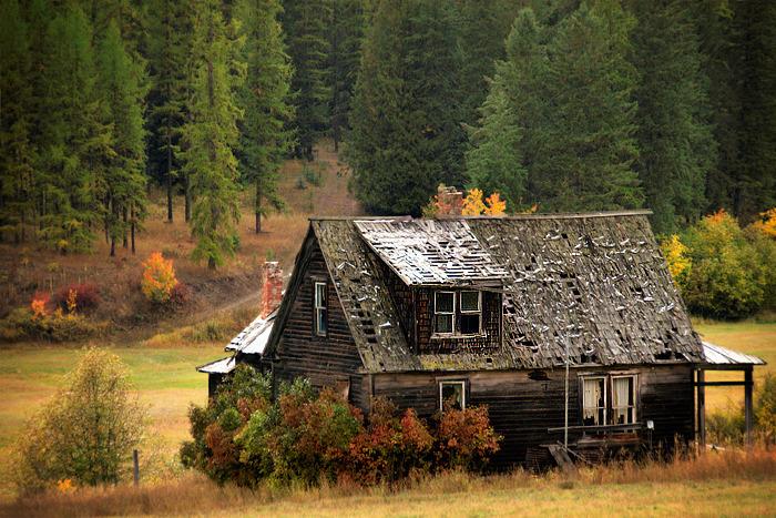 дом на окраине леса картинки очередной приезд минск
