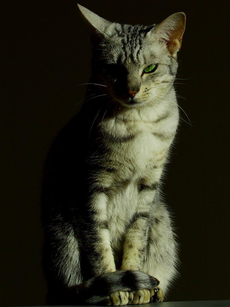 Фото Зеленоглазый кот