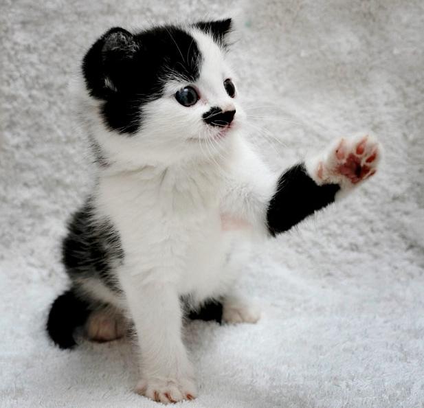 Тэги животные кошки милые
