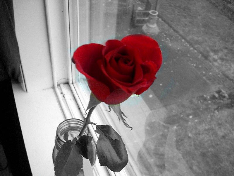 грузинской картинка роза на подоконнике трахает трех