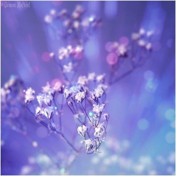 Фото красивые цветы demon mathiel